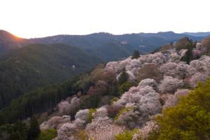 吉野山千本桜ツーリング2014