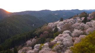 ST250で行く、吉野山千本桜ツーリング2014