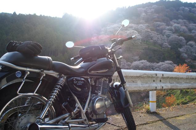 ST250 in 吉野山