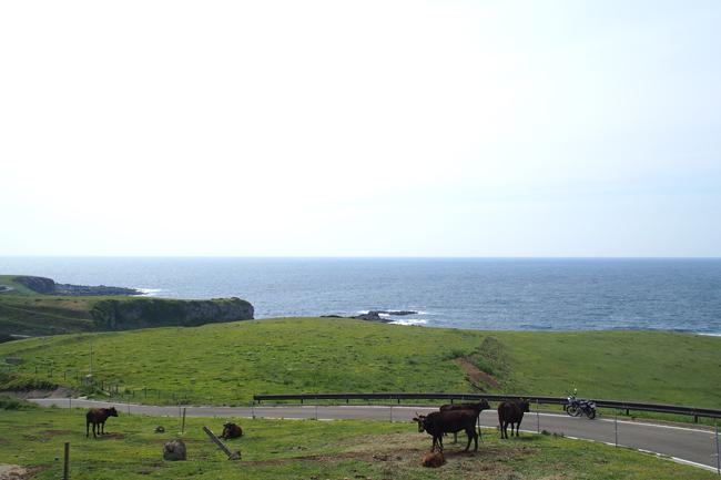 ST250と牛 in 五島列島 宇久島