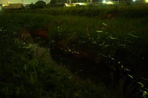 滋賀県米原市 第31回天の川ほたるまつりに行ってきた