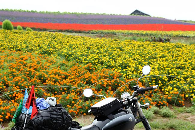 ST250 in 北海道の花畑