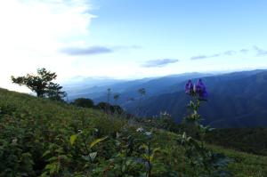 滋賀県最高峰 伊吹山に登ってきた(車で)