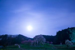 月と星と桜の共演!本郷の瀧桜(又兵衛桜)