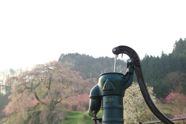 本郷の瀧桜と井戸