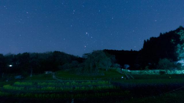 本郷の瀧桜