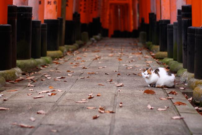 猫の写真を見て癒やされよう! 猫フォルダ開放!