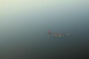 アンコール・ワットの池の蓮の花