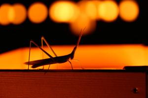 (虫注意)6月4日、虫の日に虫写真フォルダ開放!