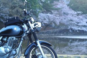奈良お花見ツーリング2016 その1 奈良公園編
