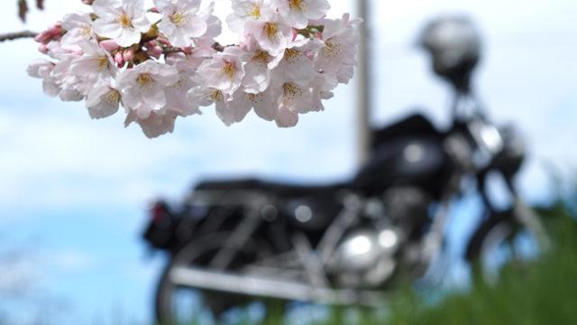 ST250と桜 in 佐保川