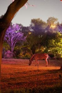 夜の動物園! 天王寺動物園の「ハロウィンナイトZOO」に行ってきた