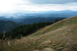 山頂一面に広がるススキが見頃! 岩湧山に登ってきた