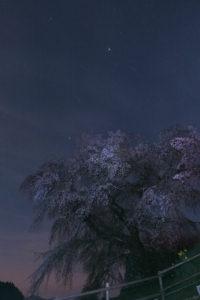 2年ぶりに本郷の瀧桜(又兵衛桜)で夜桜と星撮りに挑戦