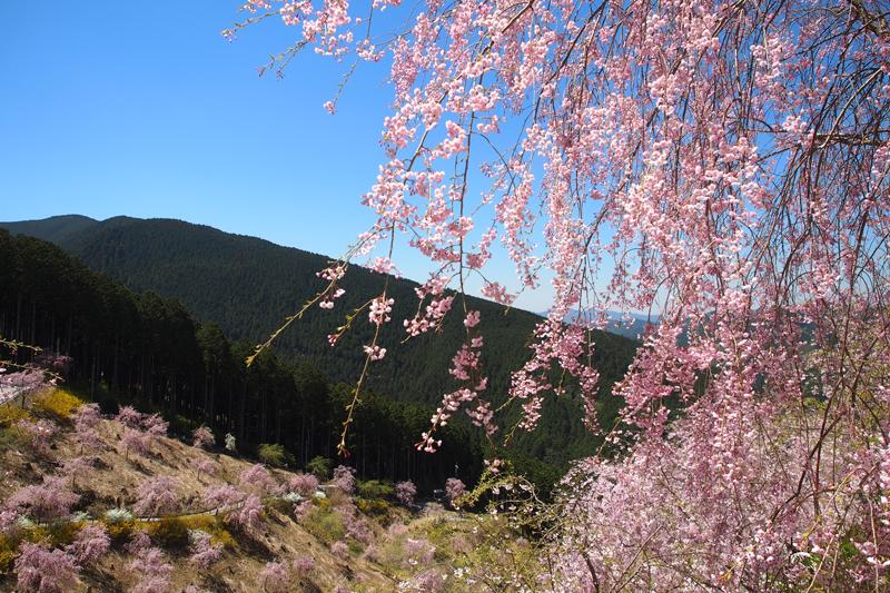 桜見ツーリング2017 その2 天空の庭 高見の郷編