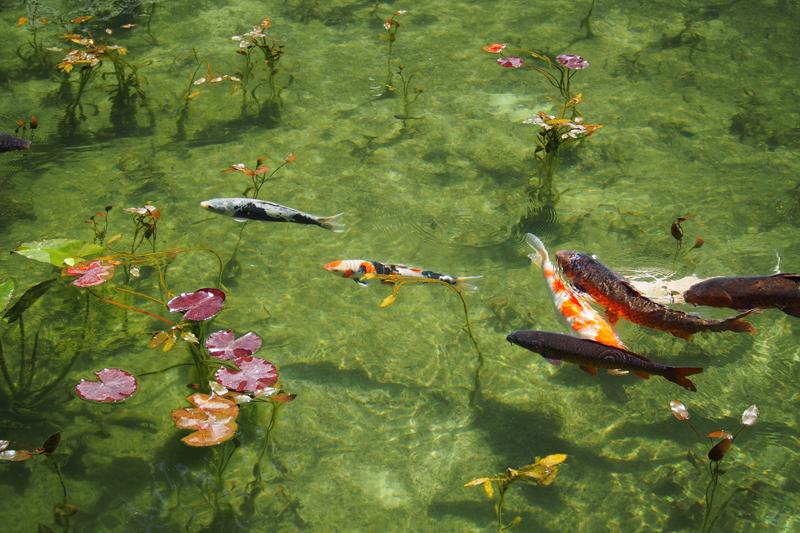 まるで絵画! 岐阜県関市にある通称「モネの池」に行ってきた