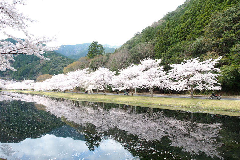 桜見ツーリング2018 下北山スポーツ公園で水鏡写真撮影
