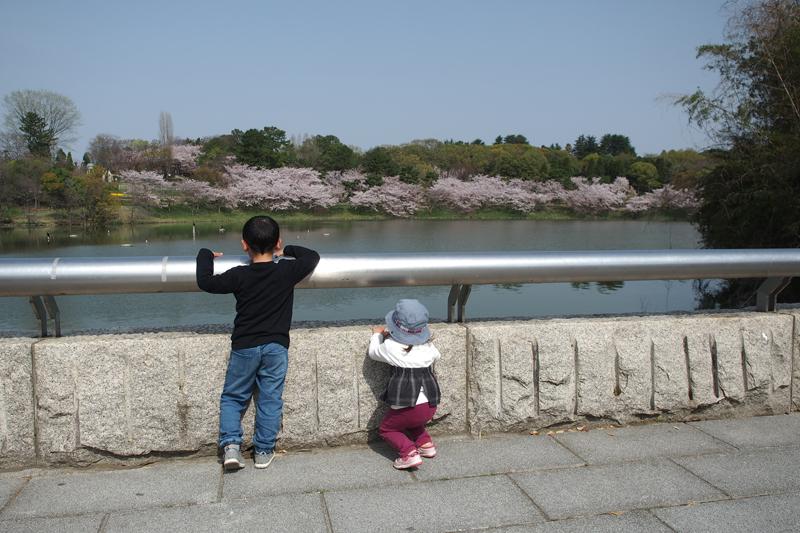 春の花博記念公園鶴見緑地でのスナップ写真