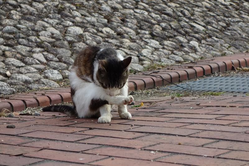 大浜公園の野良猫