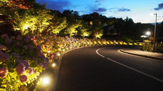 しらとりの郷のライトアップされた紫陽花