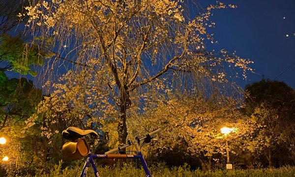 桜見ミッドナイトポタリング