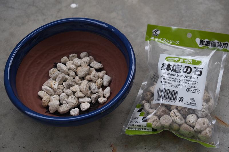 ガジュマルを新しい鉢に植え替え